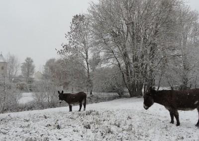 animaux-hiver-domaine-la-tour-levoy