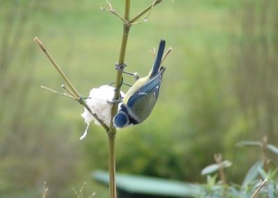 oiseaux-paradis-chambre-d'hôtes-insolite