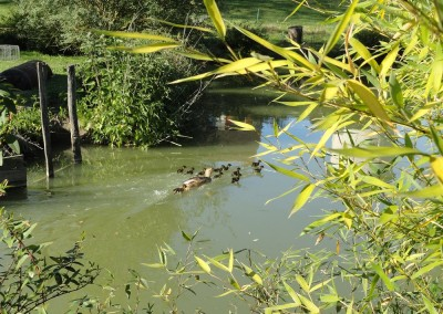 famille coin coin sur l'étang
