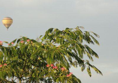 les mongolfières_au-dessus_de_l'arbre_à_soie_de_latourlevoy